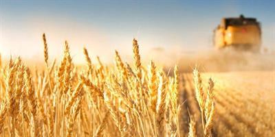 صادرات ۳۰ هزار تن گندم استان خوزستان از طریق بورس کالا