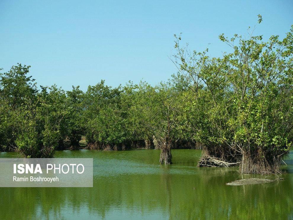 وجود بیش از ۱۰۰۰ تالاب در کشور / تالابها ۲۰۰ برابر اراضی کشاورزی بازدهی اقتصادی دارند