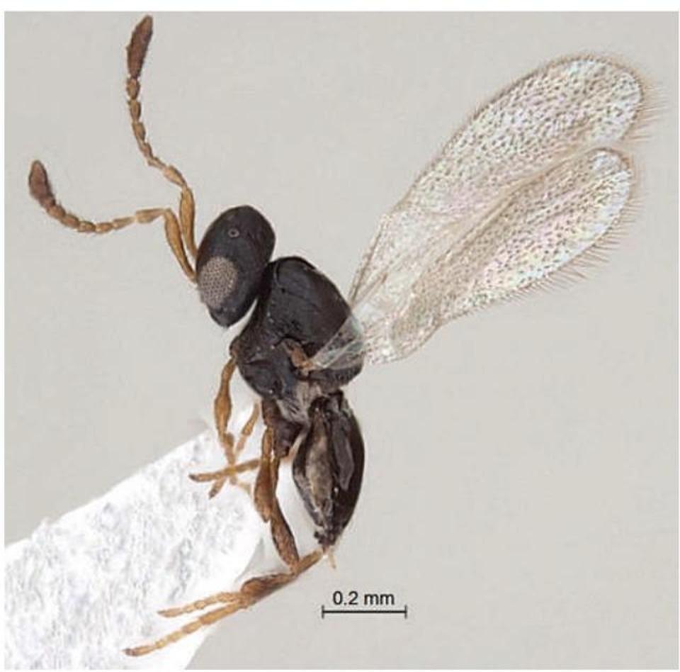 شناسایی مجموعهای از گونههای جدید گیاهی و جانوری در هند