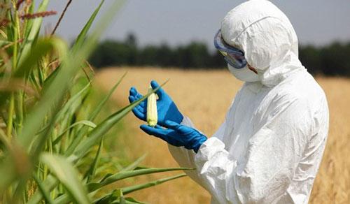 چرا تاجران و مدافعان تراریخته از «محصولات ارگانیک» متنفرند