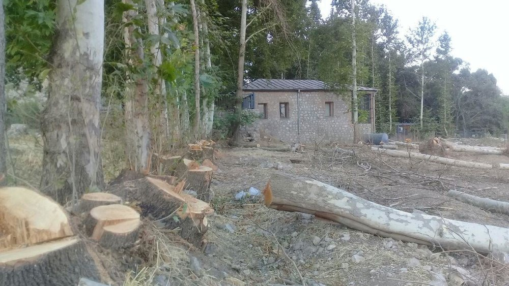 درختانی که قربانی بیتدبیری شدند
