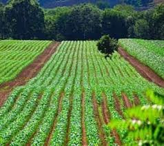 """نظر وزارت بهداشت درباره """"سلامت"""" محصولات کشاورزی"""