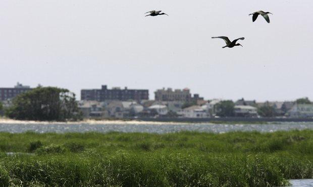 تشدید گشتهای زیست محیطی همزمان با شیوع بیماری آنفولانزای فوق حاد پرندگان