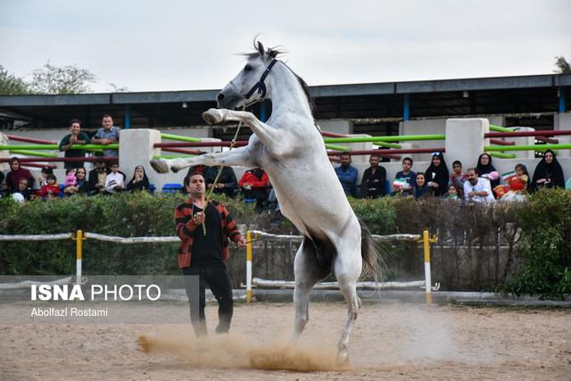 جشنواره زیبایی اسب – بوشهر