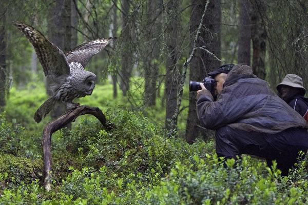 ویدئو / جسورترین تصویربرداران حیات وحش – قسمت چهارم