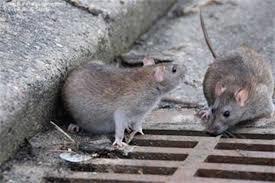کنترل جمعیت موشها در تهران با استفاده از شیوههای علمی
