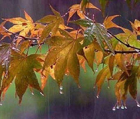 بارش باران در شمال، مرکز و غرب کشور/ کاهش دمای تهران در روز شنبه