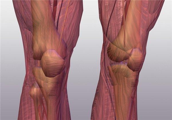 توسعه توان عضلانی یکی از اساسیترین سازگاریهای فیزیولوژیکی