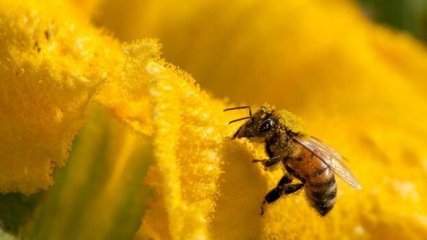 زنبور گزیدگی؛ از واکنشهای آلرژیک تا مرگ