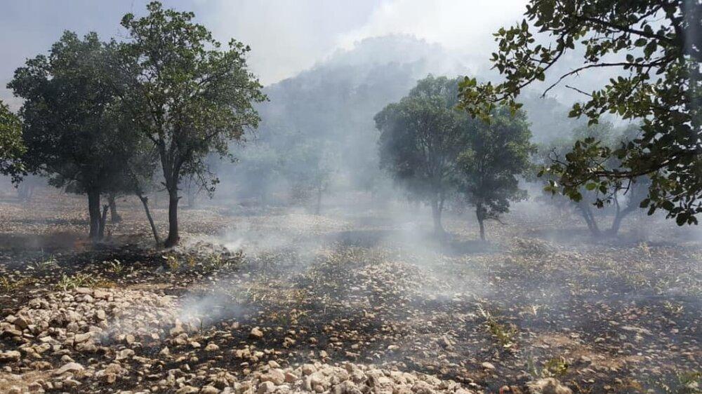 دستگیری ۲۴ نفر از عاملان آتش سوزی جنگلهای کهگیلویه و بویراحمد