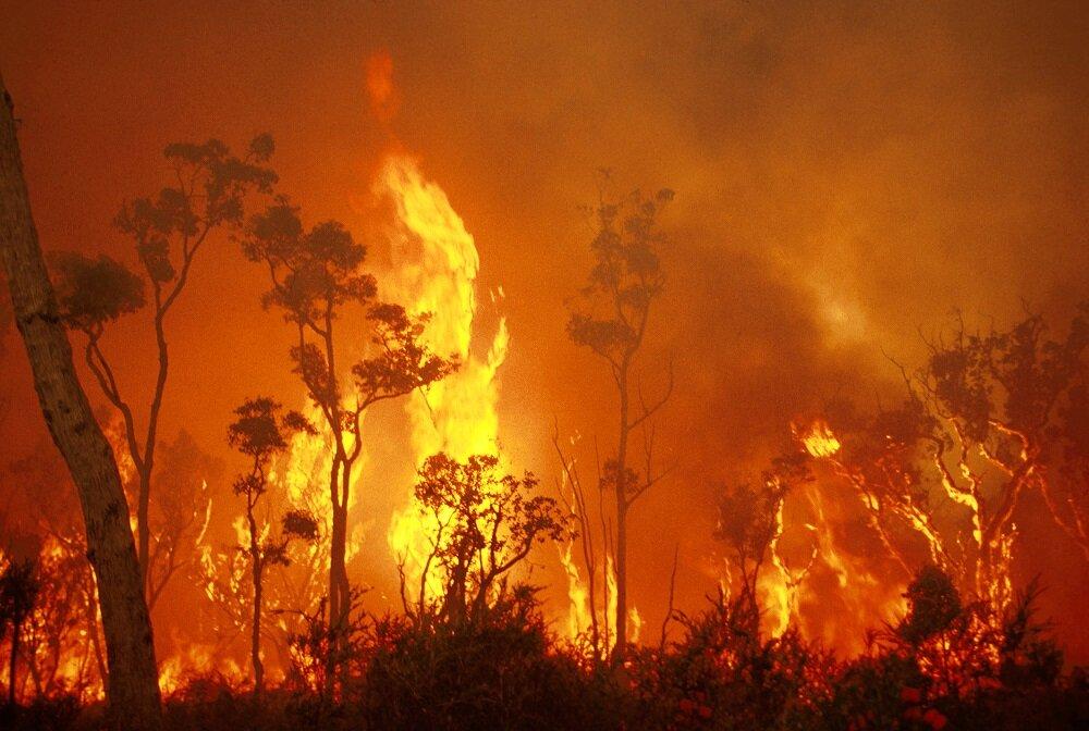 آلودگی آتشسوزی جنگلها عملکرد ژنها را تغییر میدهد