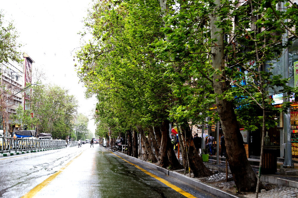 تبدیل خیابان ولیعصر به پیادهراه برای حفظ درختان آن