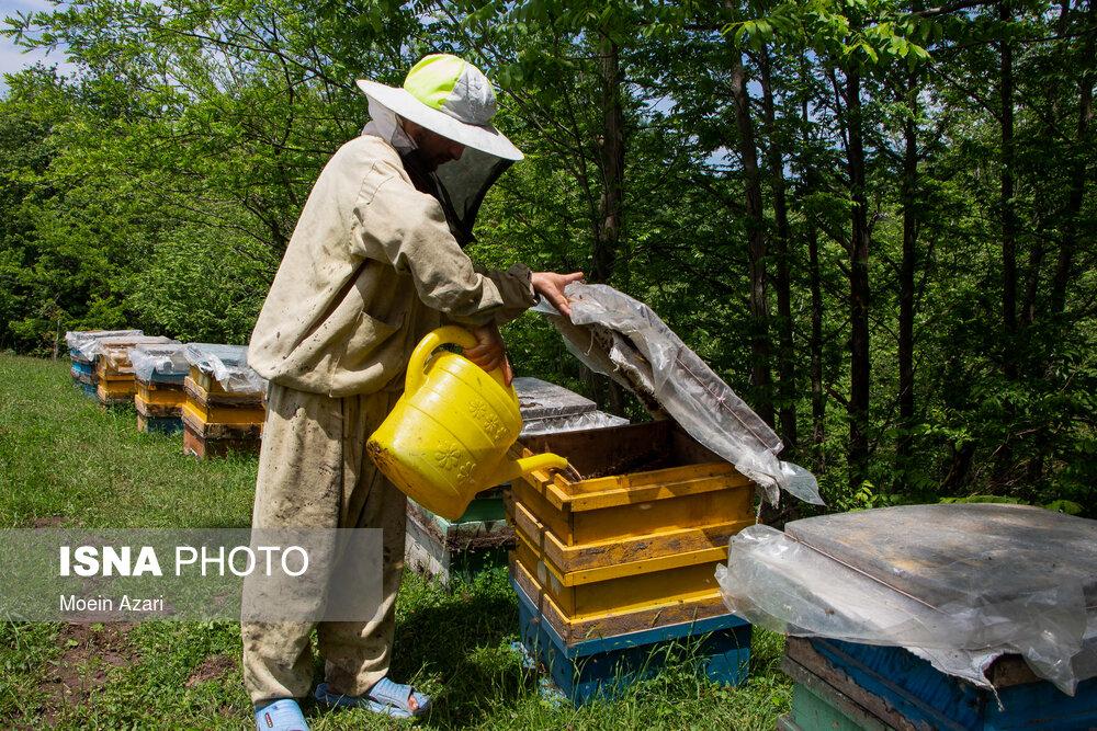 زهر مشکلات بر پیکر صنعت زنبورداری