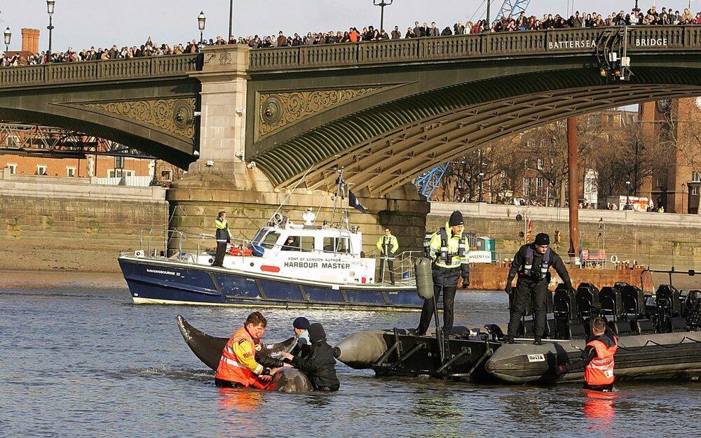 مرگ نهنگ ها، خودکشی یا پیامد فعالیت های انسانی در آب های زمین؟